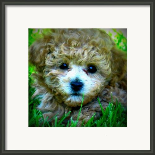Minnie Framed Print By Mg Rhoades