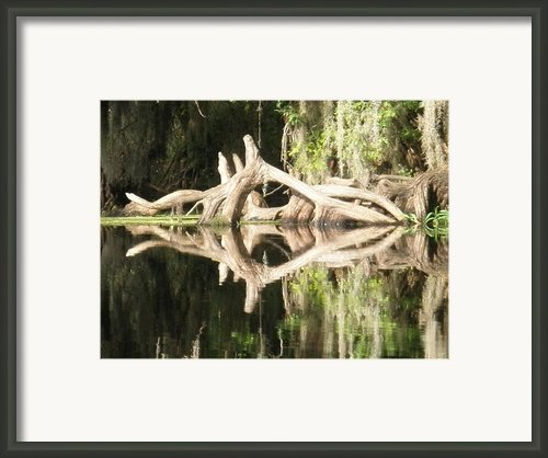Mirrorknot Framed Print By Warren Clark