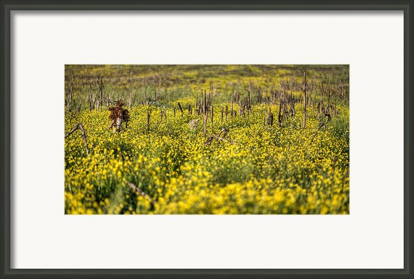 Missing You Framed Print By Jc Findley