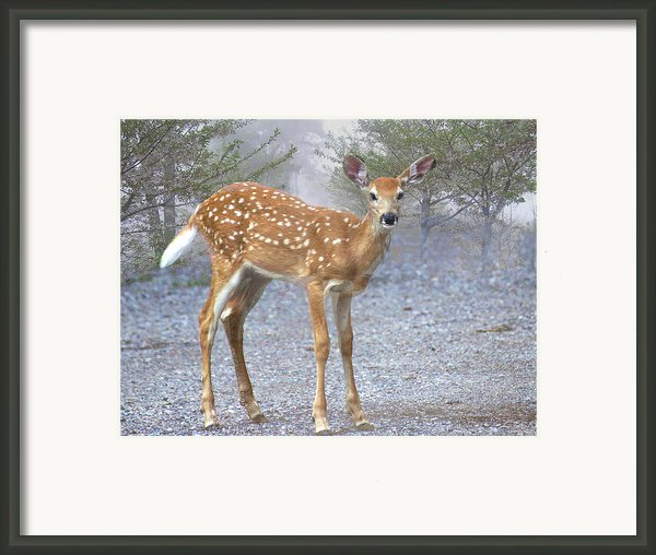 Misty Fawn Framed Print By Marty Koch