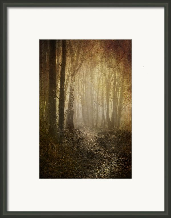 Misty Woodland Path Framed Print By Meirion Matthias