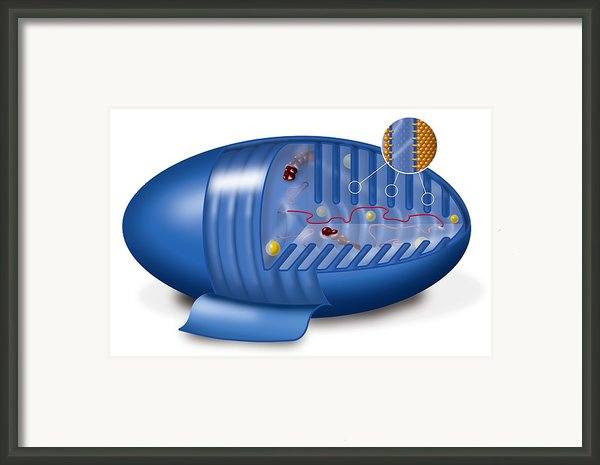 Mitochondrion, Artwork Framed Print By Art For Science