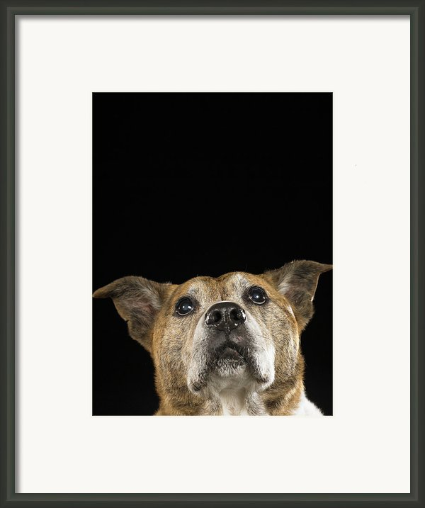 Mixed Breed Dog Looking Up Framed Print By Ryan Mcvay