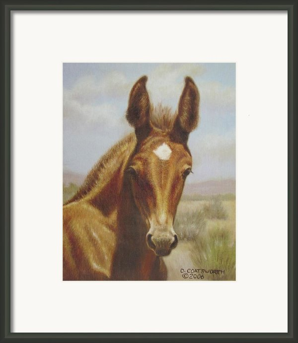 Molly Mule Foal Framed Print By Dorothy Coatsworth
