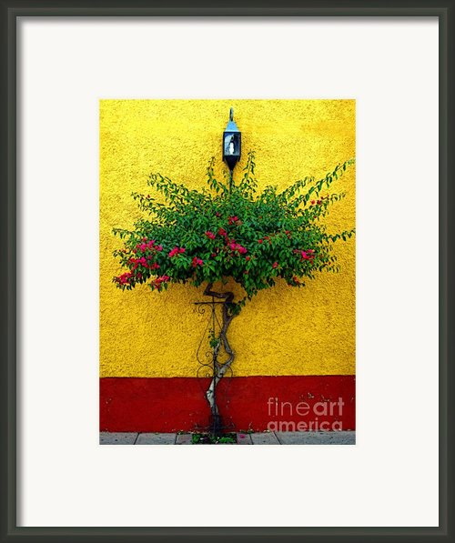 Moment Of Green Framed Print By Olden Mexico