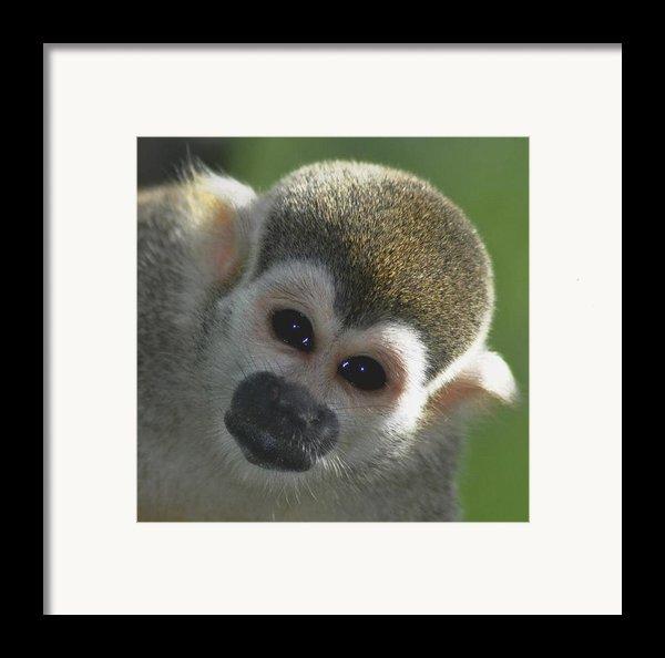 Monkey Face Framed Print By Danielle Del Prado