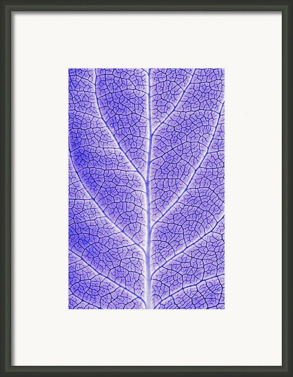 Monotone Close Up Of Leaf Framed Print By Sean White
