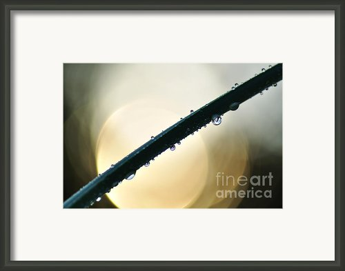 Moon Drops Framed Print By Kaye Menner
