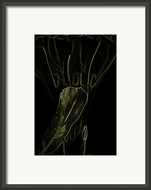 Moon Flower And Feather X Ray Framed Print By Chris Berry