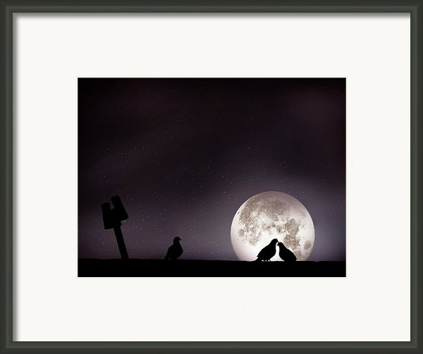 Moon With Love Pigeon Framed Print By Mhd Hamwi