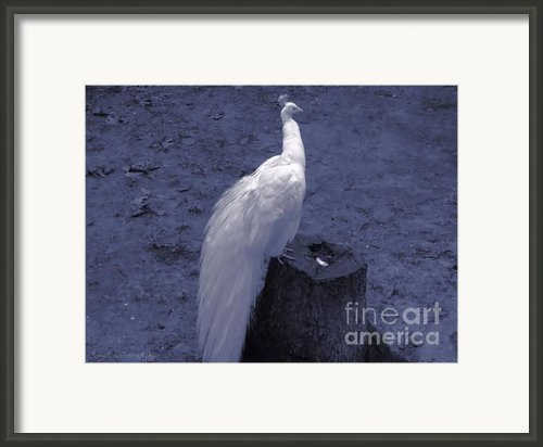 Moonlit Peacock Framed Print By Roxy Riou