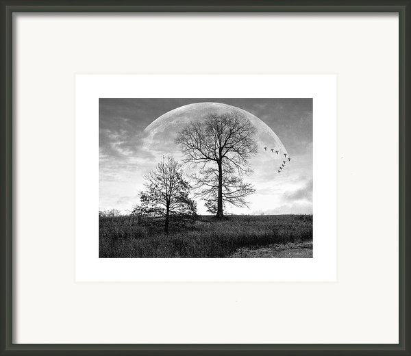 Moonlit Silhouette Framed Print By Brian Wallace