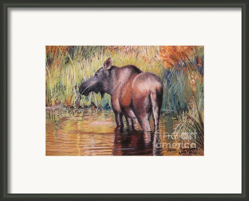 Moose In Alaska Framed Print By Terri Thompson