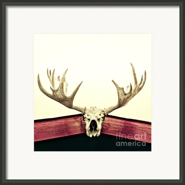 Moose Trophy Framed Print By Priska Wettstein