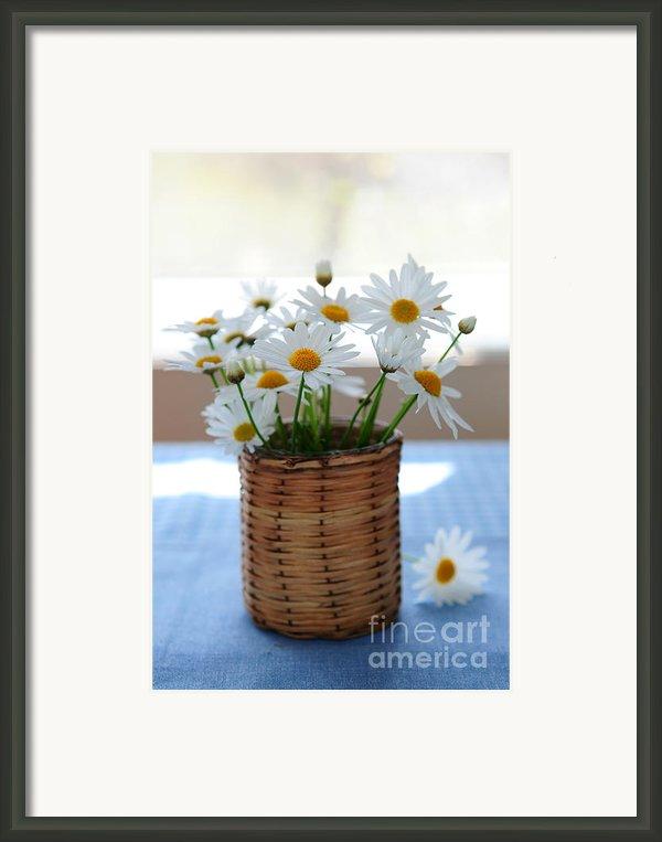 Morning Daisies Framed Print By Elena Elisseeva