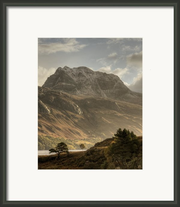 Morning Glory Framed Print By Colette Panaioti