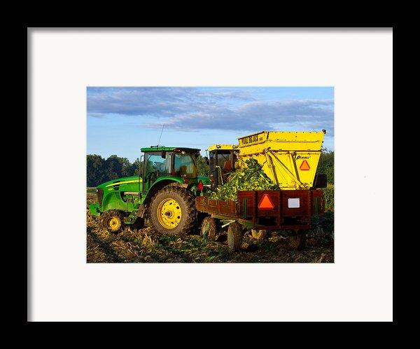 Morning Harvest Framed Print By Tim  Fitzwater