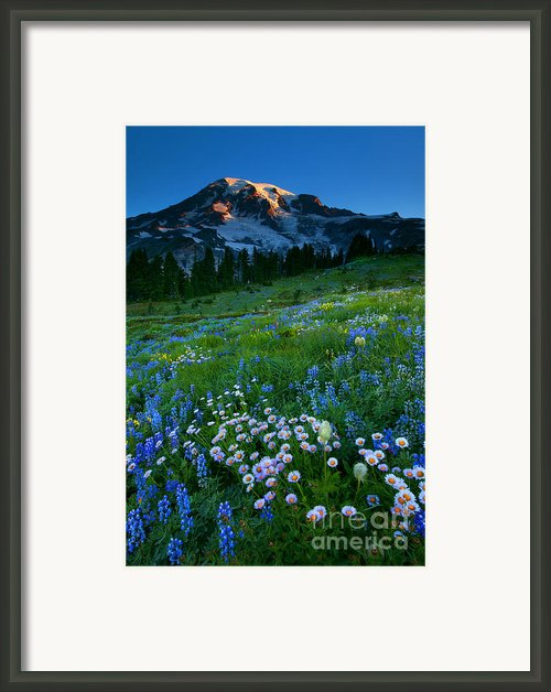 Morning Majesty Framed Print By Mike  Dawson