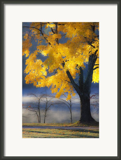 Morning Maple Framed Print By Rob Travis