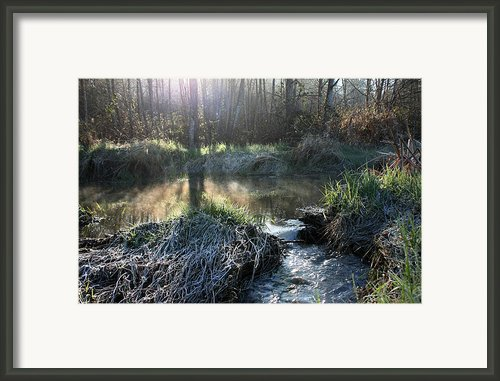 Morning On Misty Creek Framed Print By Barbara  White