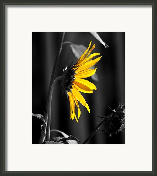 Morning Sun Framed Print By Clayton Bruster