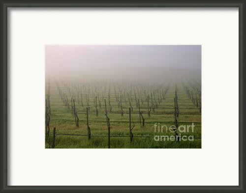 Morning Vineyard Framed Print By Balanced Art