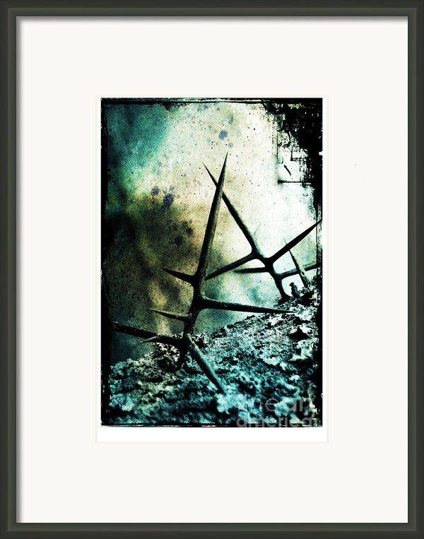 Mortal Combat Framed Print By Judi Bagwell