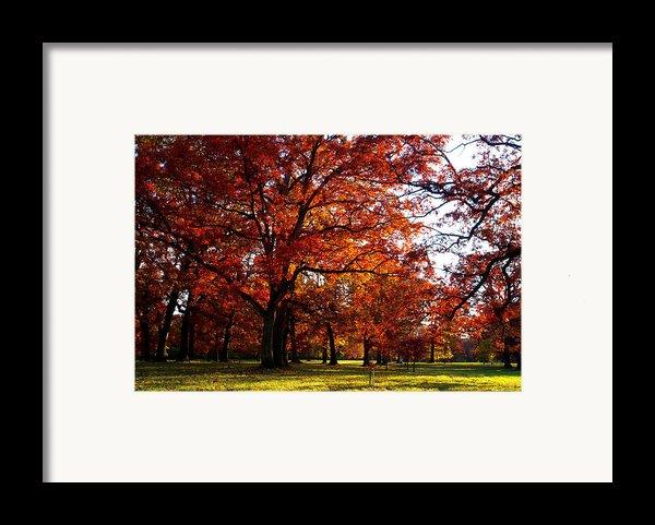 Morton Arboretum In Colorful Fall Framed Print By Paul Ge