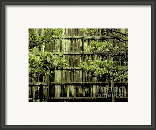 Mossy Bamboo Fence - Digital Art Framed Print By Carol Groenen