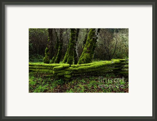 Mossy Fence 3 Framed Print By Bob Christopher