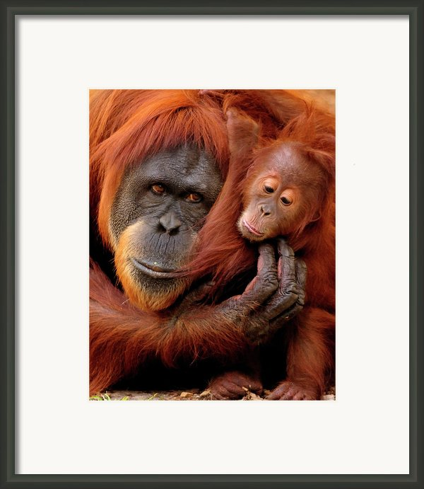 Mother And Baby Framed Print By Andrew Rutherford  - Www.flickr.com/photos/arutherford1