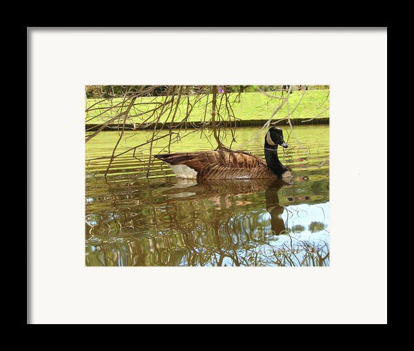 Mother Goose Framed Print By Laura Brightwood