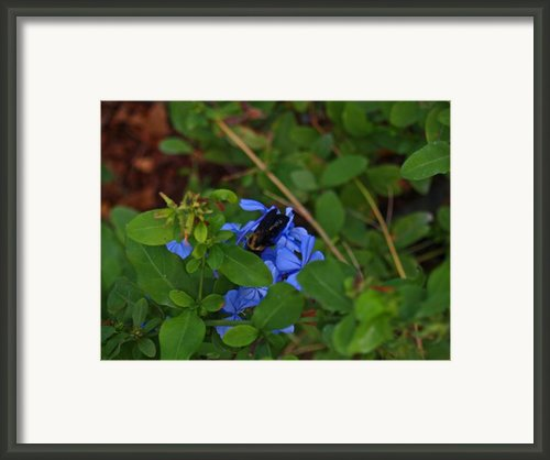 Mother Nature At Work Framed Print By James Granberry