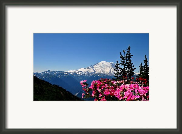 Mount Rainier Seen From Crystal Mountain Summit  2 Framed Print By Tanya  Searcy