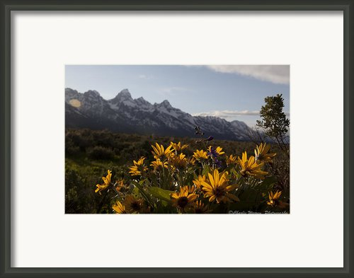 Mountain Flowers Framed Print By Charles Warren