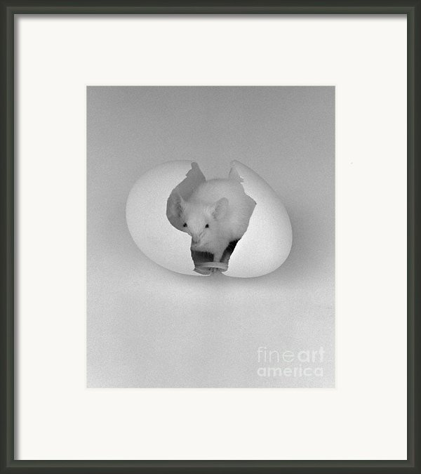 Mouse House Framed Print By Michael Swanson
