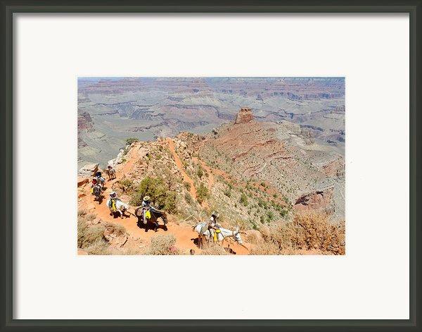Mules On A Switchback Ii Framed Print By Julie Niemela