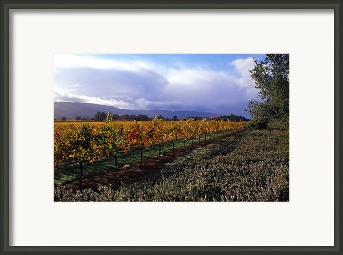 Mumm Napa Vineyard Framed Print By Richard Leon