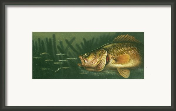 Murky Water Walleye Framed Print By Jq Licensing