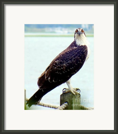 My Feathered Friend Framed Print By Karen Wiles