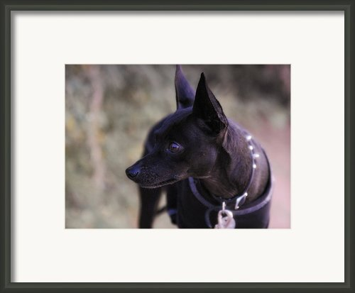 My Shadow  Framed Print By Saija  Lehtonen