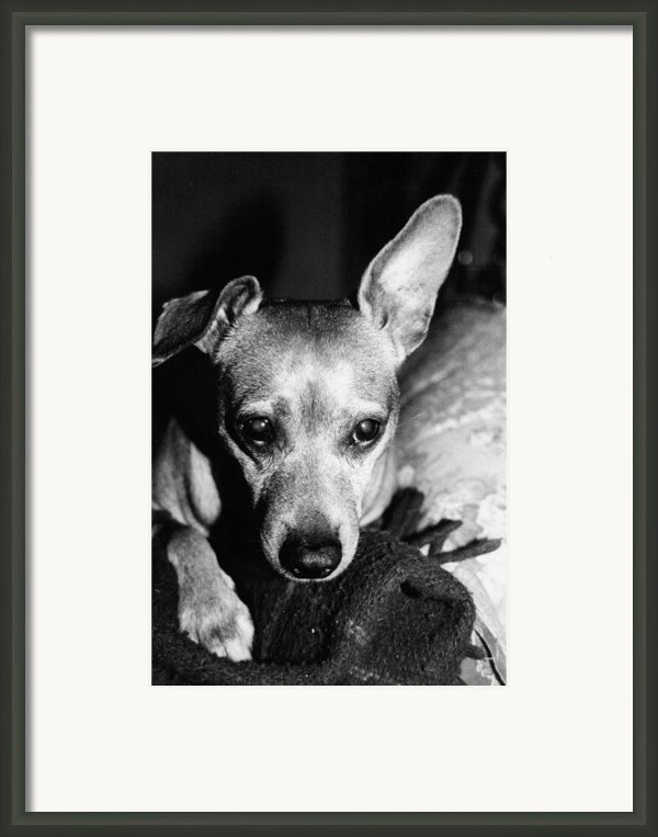 My Sweet Angel Framed Print By Alessandro Della Pietra