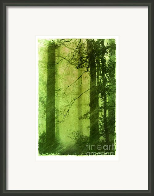 Mystical Glade Framed Print By Judi Bagwell