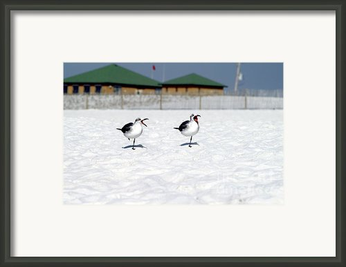 Nag Nag Nag Framed Print By Jack Norton