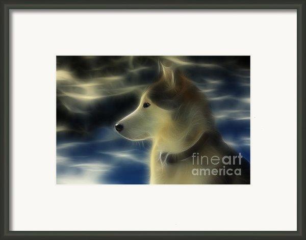 Nanuk Husky Fractal Framed Print By Marjorie Imbeau