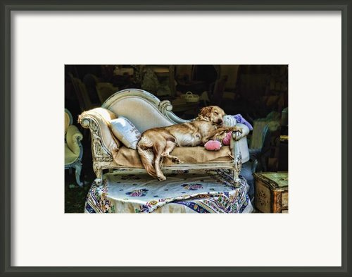 Nap Time Framed Print By Edward Sobuta