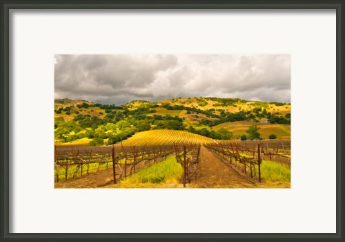 Napa Valley Vineyard Framed Print By Mick Burkey