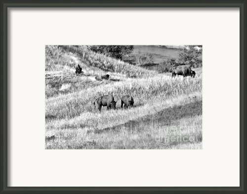 National Bison Range Wildlife Refuge Mt Usa Framed Print By Christine Till