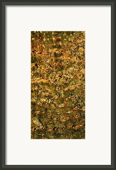 Natural Texture Framed Print By James Hammen