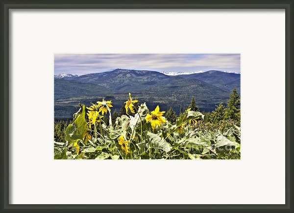 Nature Dance Framed Print By Janie Johnson